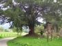 Covadonga 2004