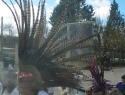 guadalupe2010 391